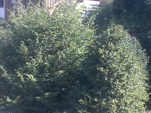 Clemson University Webcam - The Class of 1956 Academic Success Center